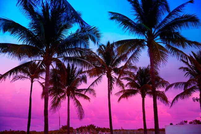Coconut trees are a typical element in Palm Beach area.